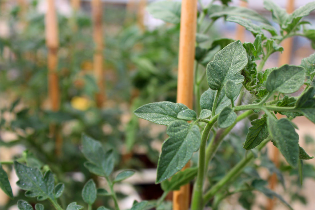 Plants_Biostimulants-1-1