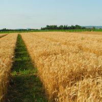 agricuture-e1552482611516
